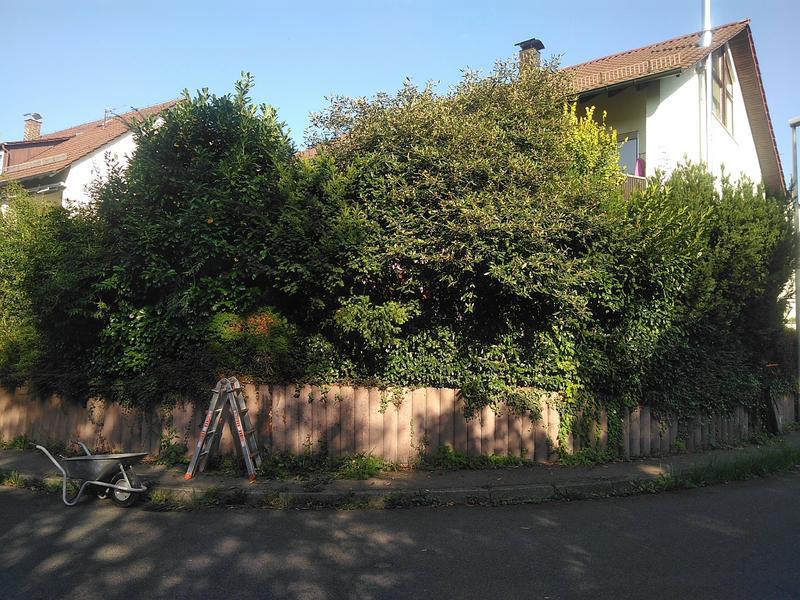 Hausgarten vorher